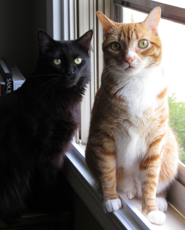 Cole and Marmalade